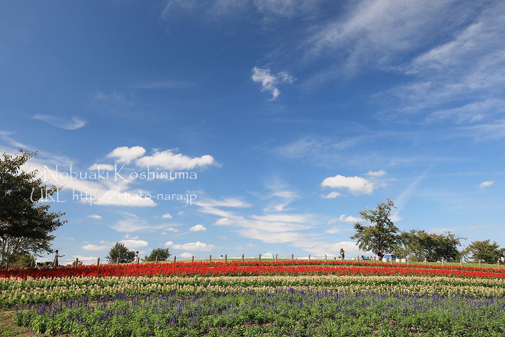 集いの丘に咲く花。シートを引いてランチをされてる方がたくさんいました。。