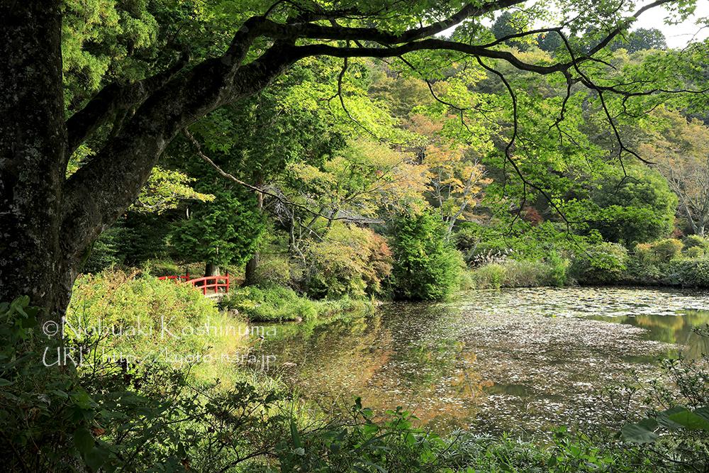 まだ少し時間があるので鳥見山山頂近くにある公園にも立ち寄ってみました。写真は勾玉池。