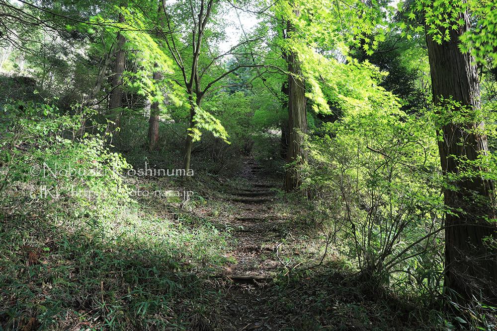 紅葉の名所としても知られる鳥見山公園。今年も楽しみですね。