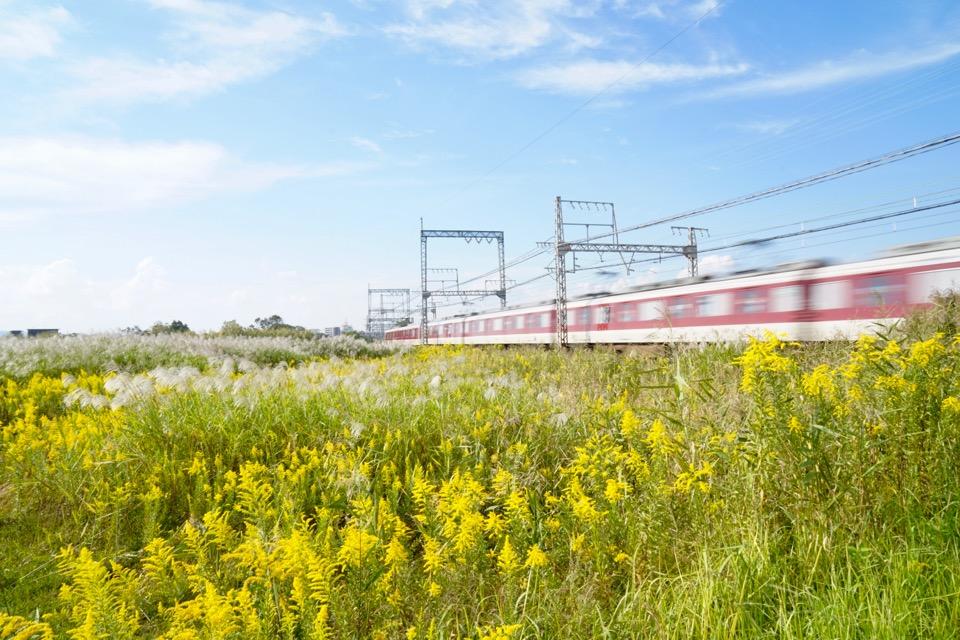 黄色い花はセイダカアワダチソウです。平城京の中には近鉄電車が通っています。のどかです。