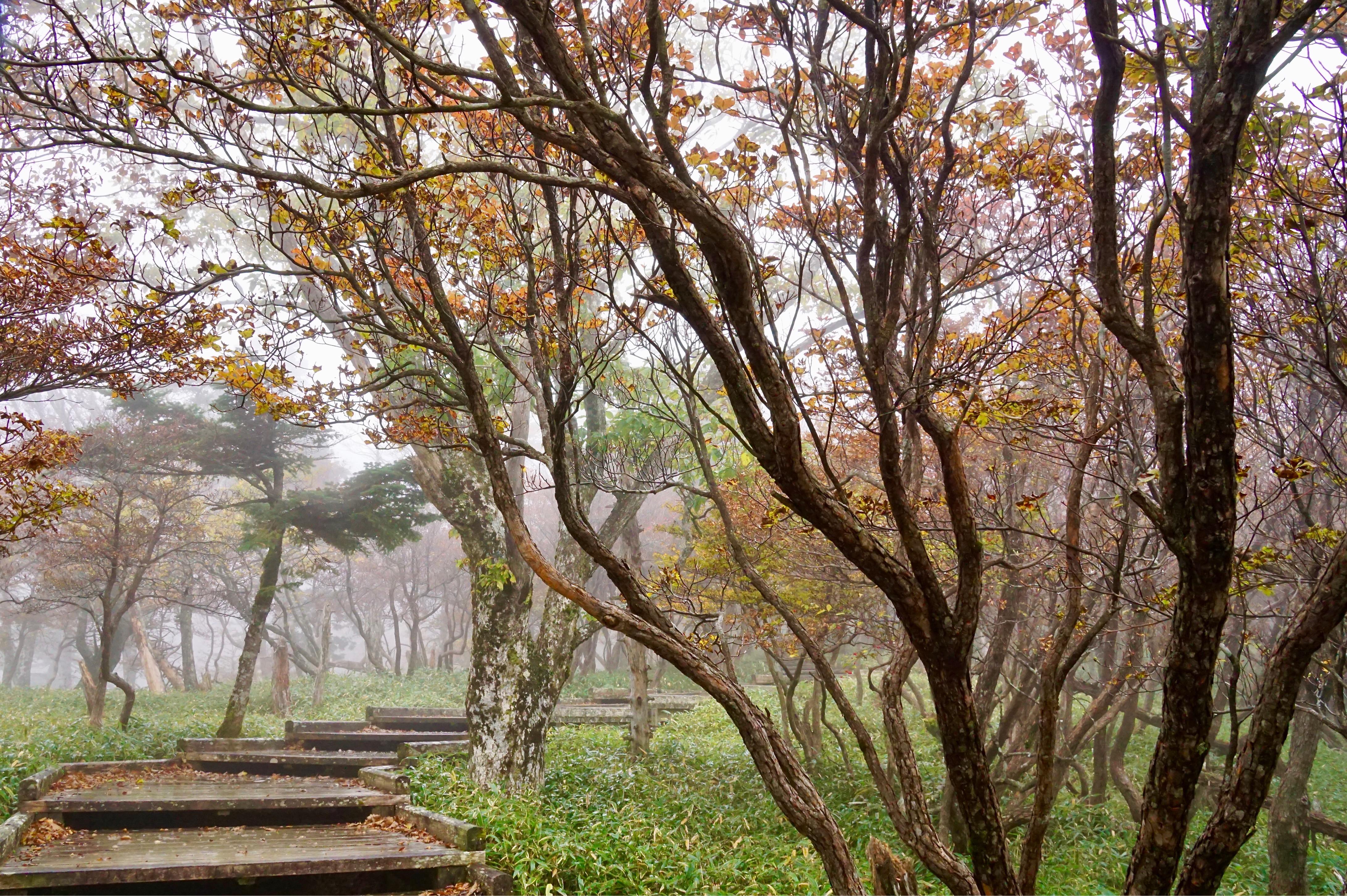 ところが大台ケ原について見ると霧がすごくてだんだんひどくなってきました。