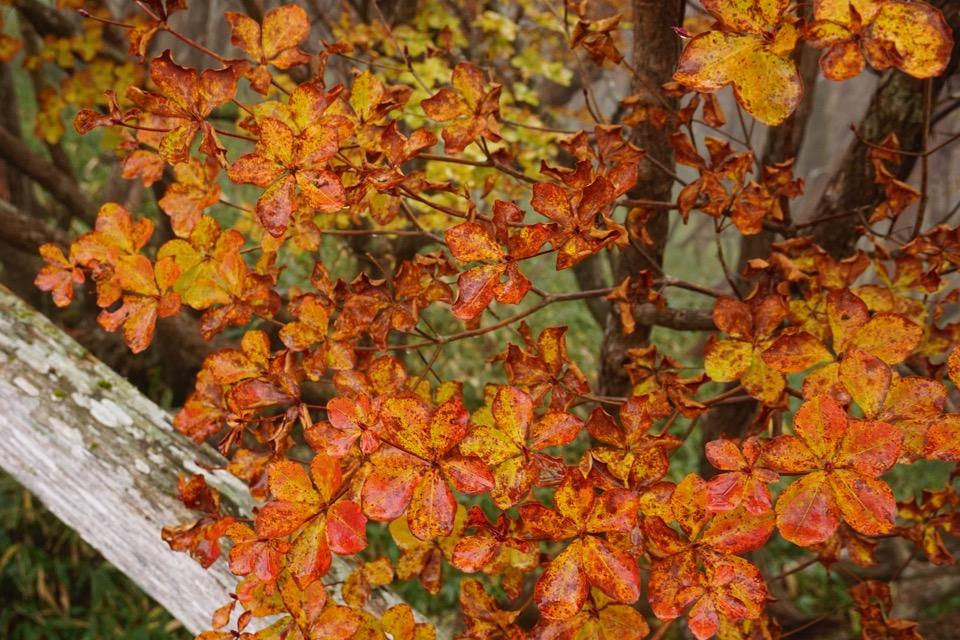 紅葉も見頃でした。