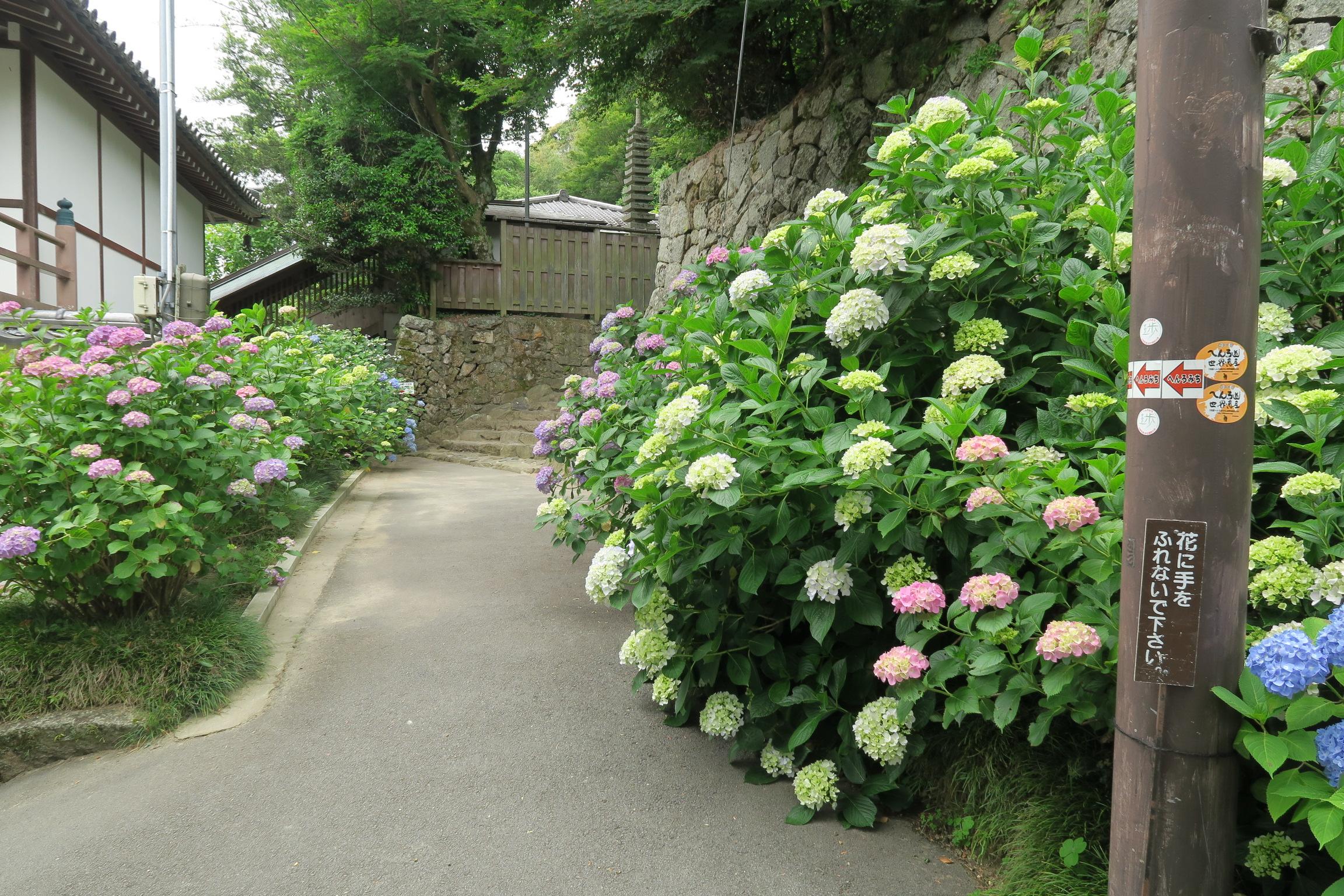 矢田寺「四国八十八ヶ所霊場」に行ってきました。