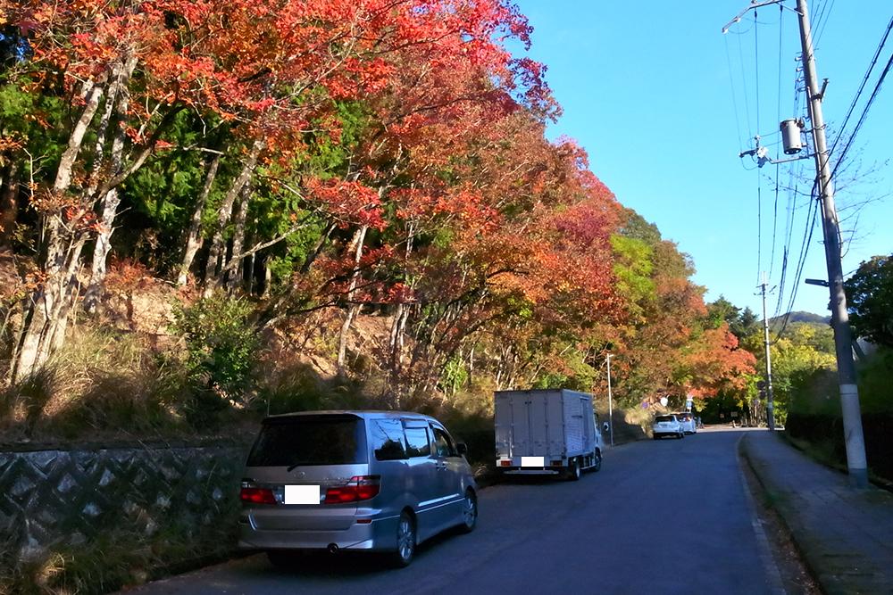さてさてこれから自転車で若草山に向かいます。入口付近の木々は赤く紅葉してました。