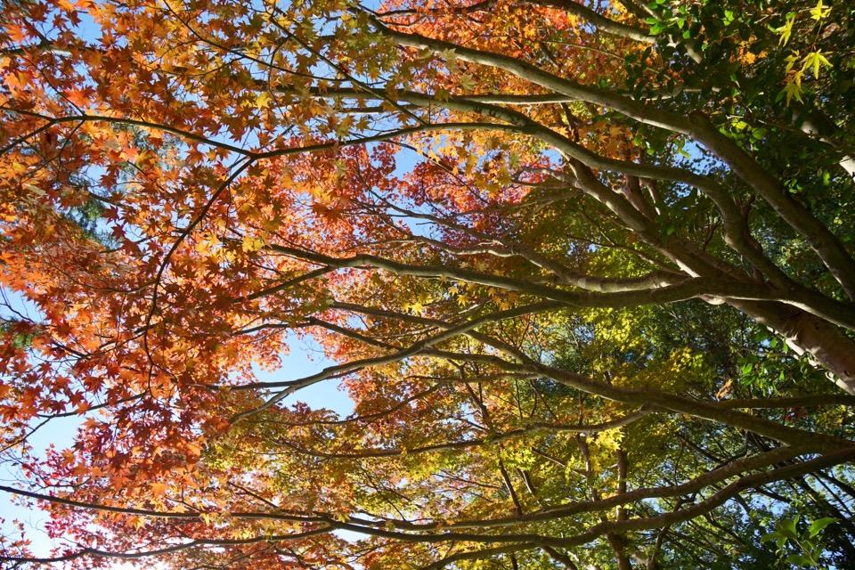 円成寺の紅葉はとても綺麗です!