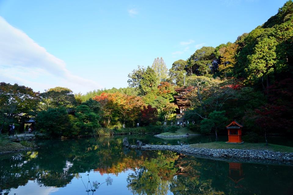 池に映る姿も美しいです。