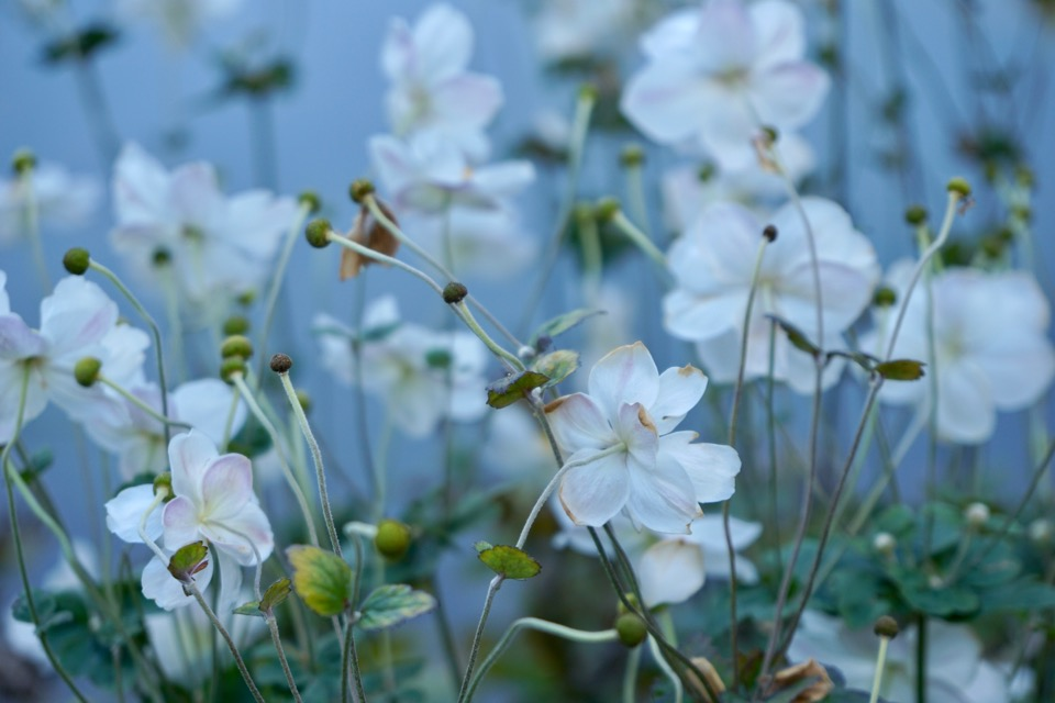 池のほとりにも花がいっぱいでした。
