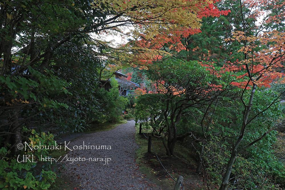 円成寺の向かいにあるお食事処「里」。ここにもいつかゆっくり来てみたいですね。。。