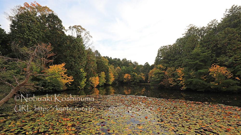 円成寺近くにある池も秋色に!