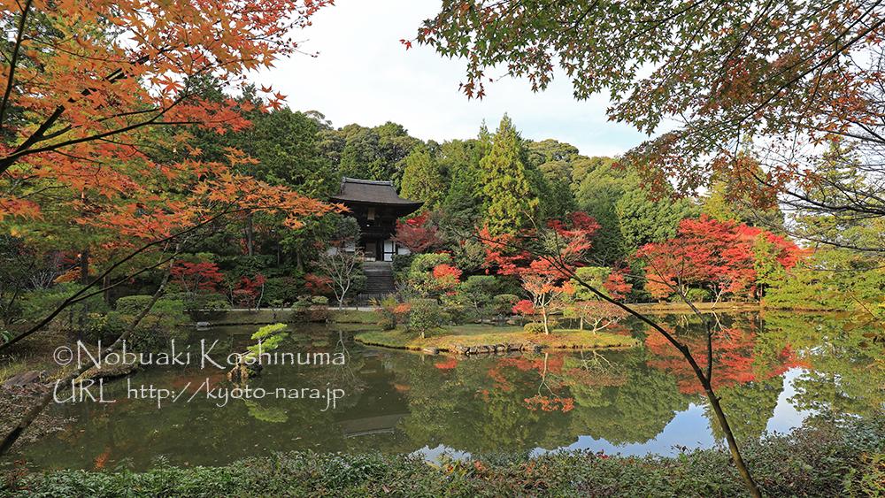 庭園周りのモミジの葉も色づいて、見頃となっていました。