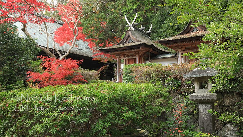 本堂の脇に立つ春日堂と白山堂。現存する最古の春日造社殿で国宝に指定されています。
