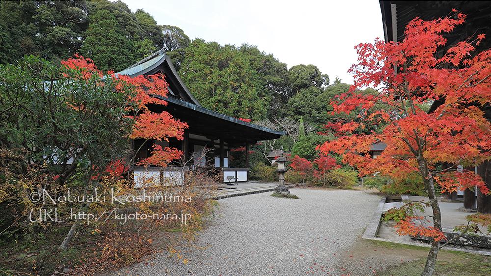 この季節の京都奈良はどこも人でいっぱいですが、円成寺はゆっくりできるのでおススメです!