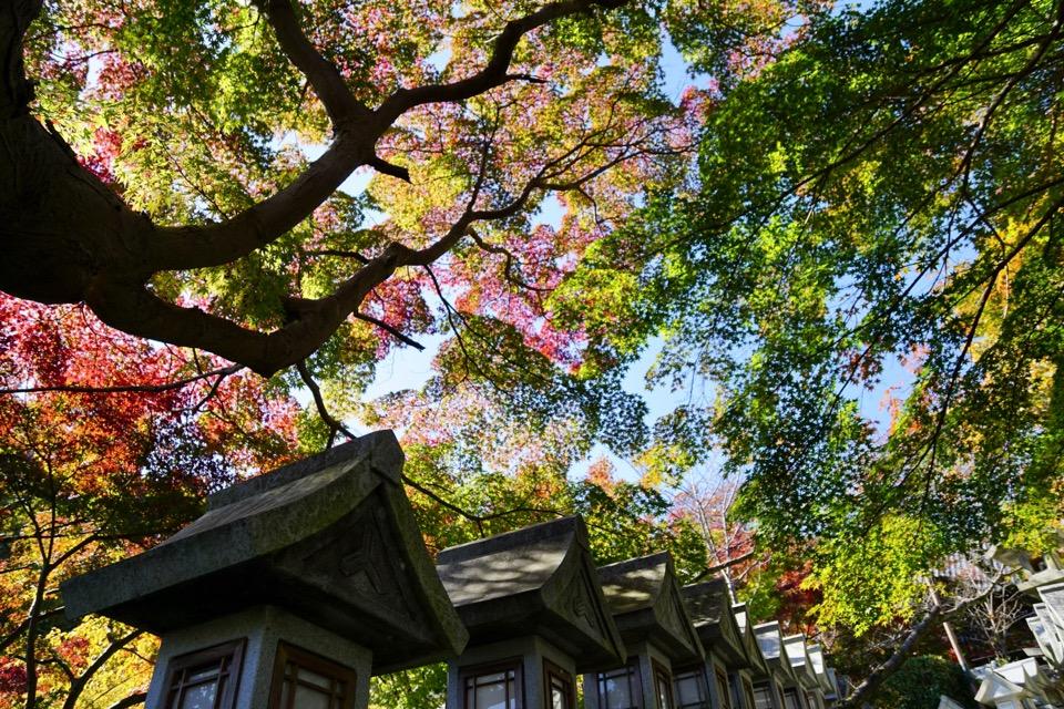 信貴山朝護孫子寺の紅葉素晴らしいです。