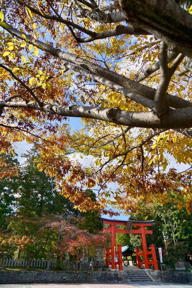 立派な鳥居と紅葉が本当に美しく映えます。
