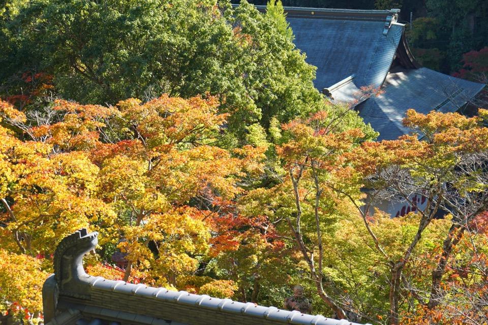 斜面に建っているので色々なところから紅葉を眺める事ができます。
