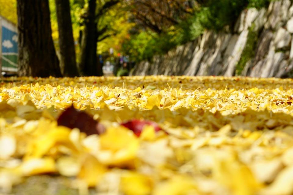 道いっぱいの落ち葉もとても美しく、輝いていました。