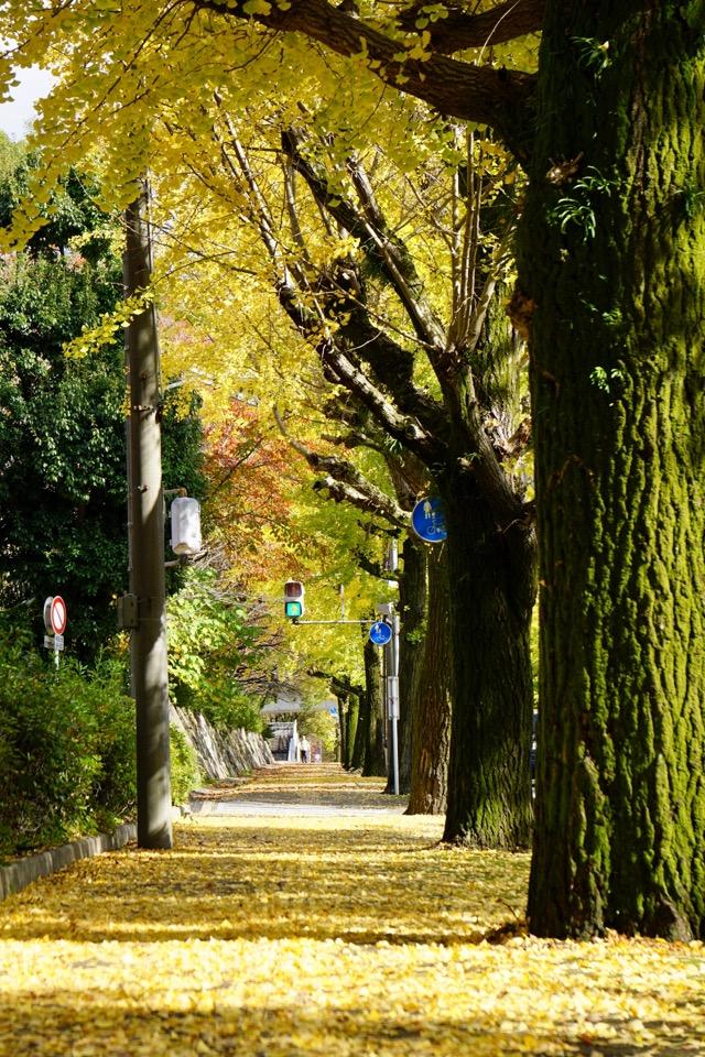 この通り木々も道もとってもきれいでした。