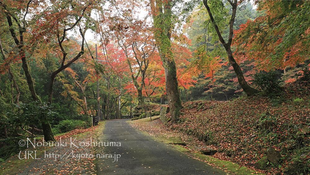 正暦寺のお寺周辺の紅葉もオススメです。