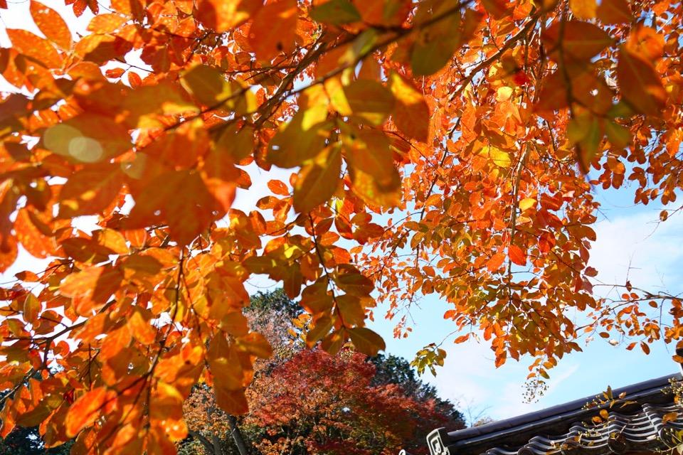 東大寺の近くもとても綺麗に紅葉しています。