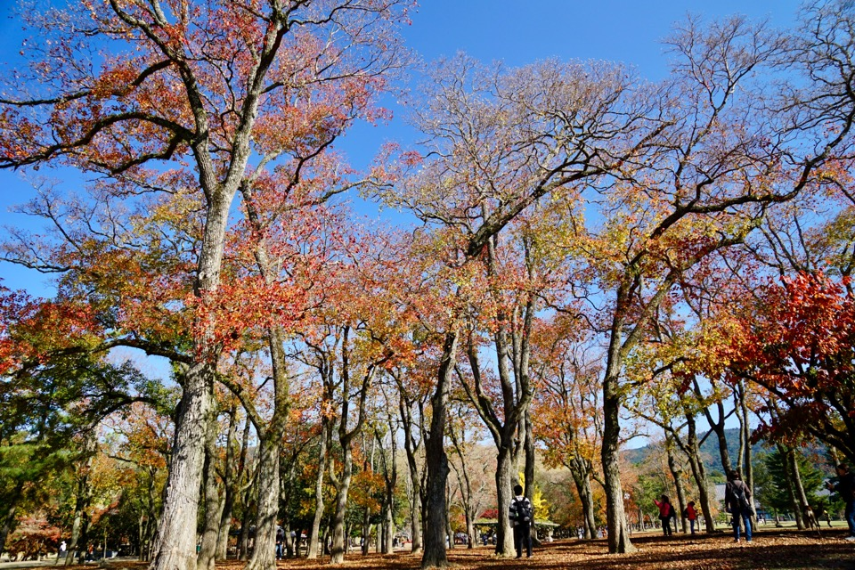 大きな木々もまだまだ綺麗でした。落葉も素晴らしいですね。