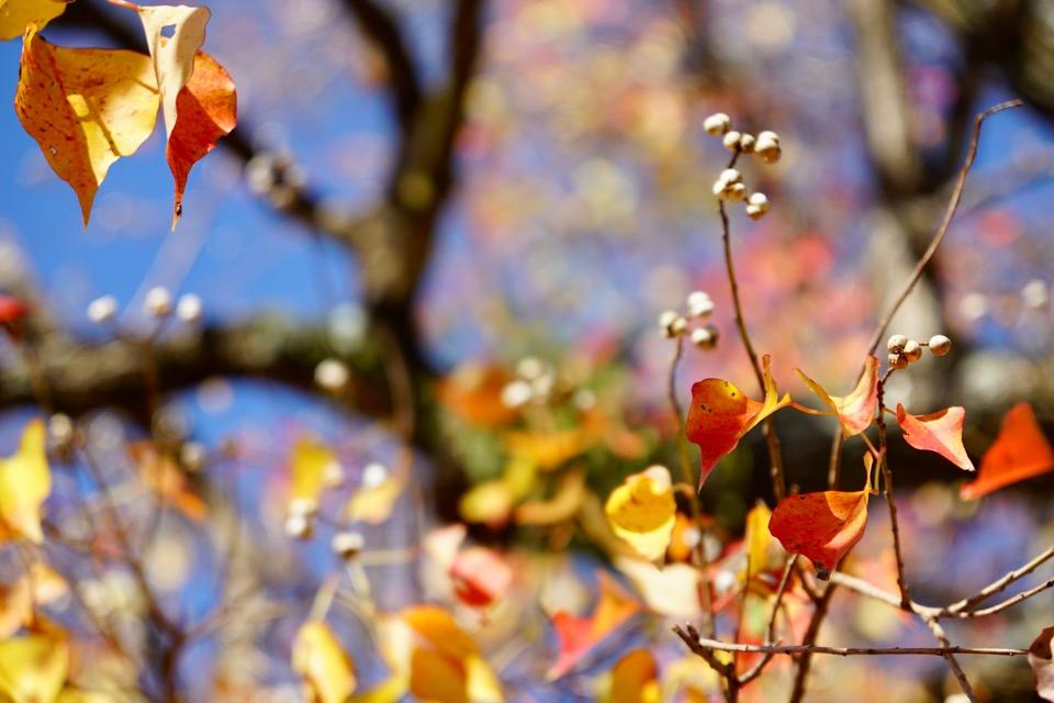 木々の種類が多いのでいろんな紅葉を楽しめます。