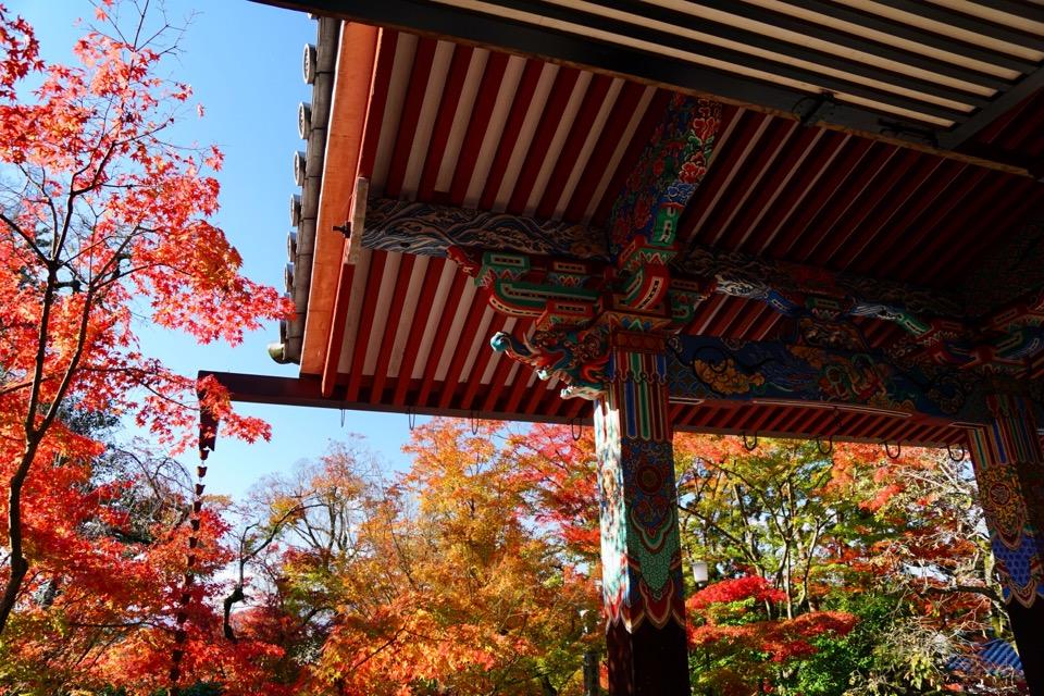 永観堂の紅葉 極彩色で本当に素晴らしかったです。