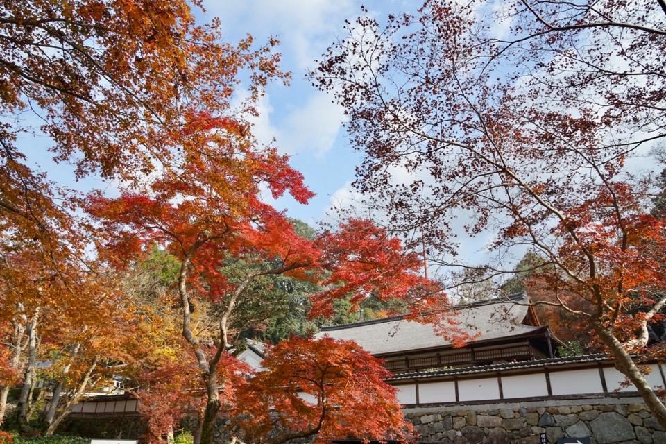 福寿円借景庭園のある建物です。紅葉の借景が見事です。