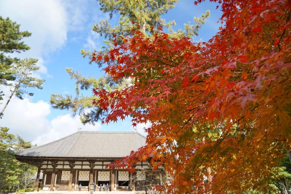 真っ赤な紅葉もまだまだ綺麗でした。