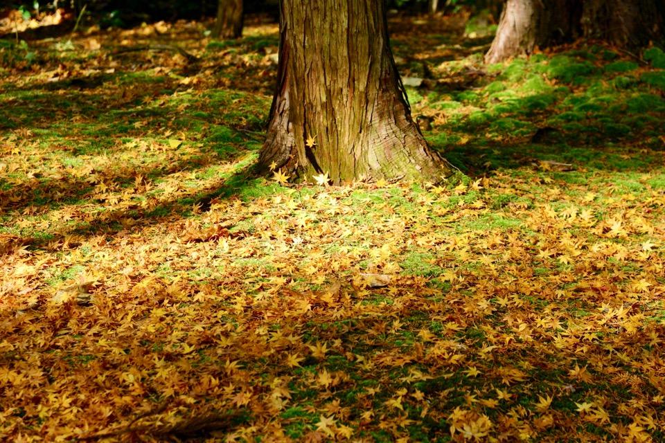 苔の上に散る紅葉。ため息が出るくらい美しかったです。