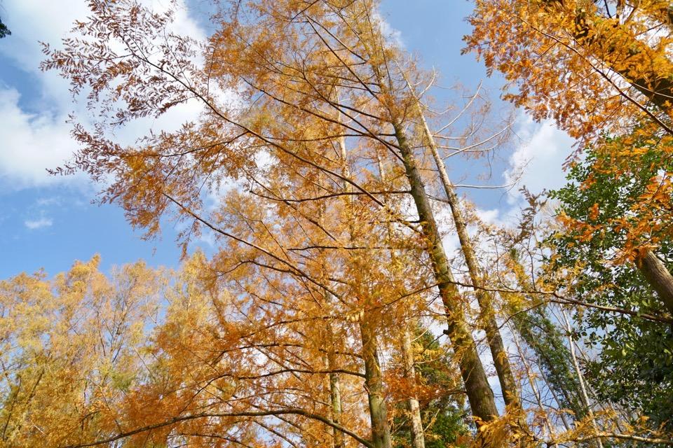 昼間は京都府立植物園へ。紅葉がとても綺麗でした。