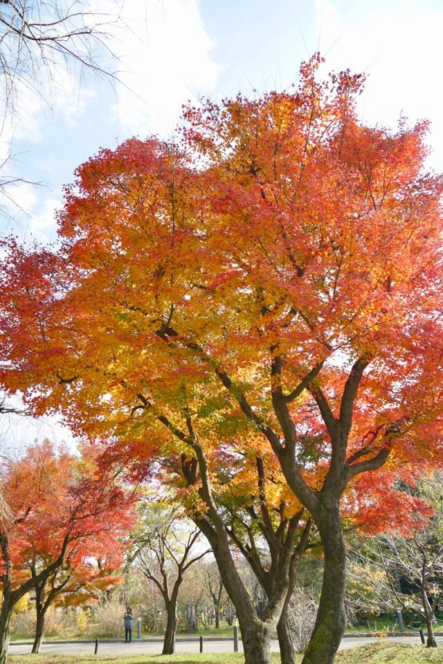 自然林にはたくさんの木々が植栽されていて自然に育てられています。