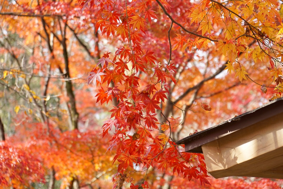 なからぎの森は紅葉真っ盛り。