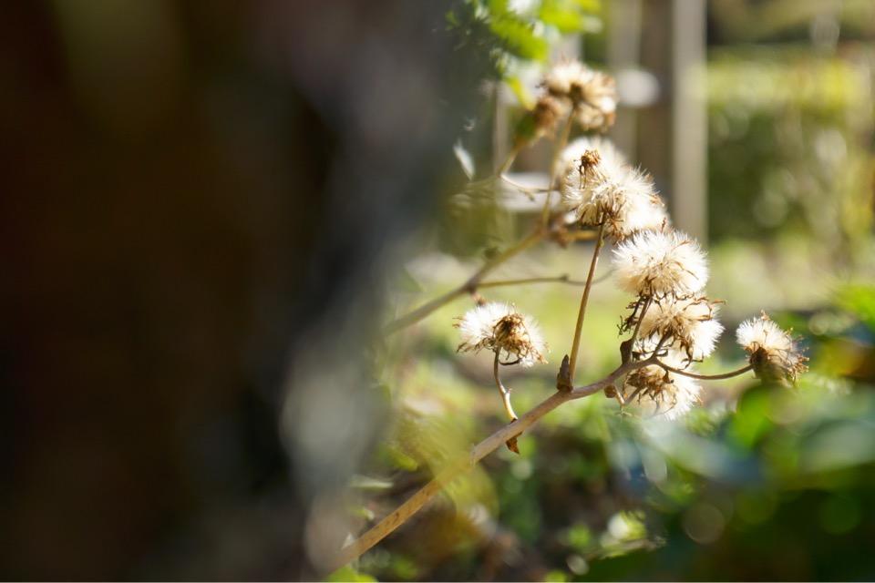 小さい草花がいっぱいで可愛かったです。