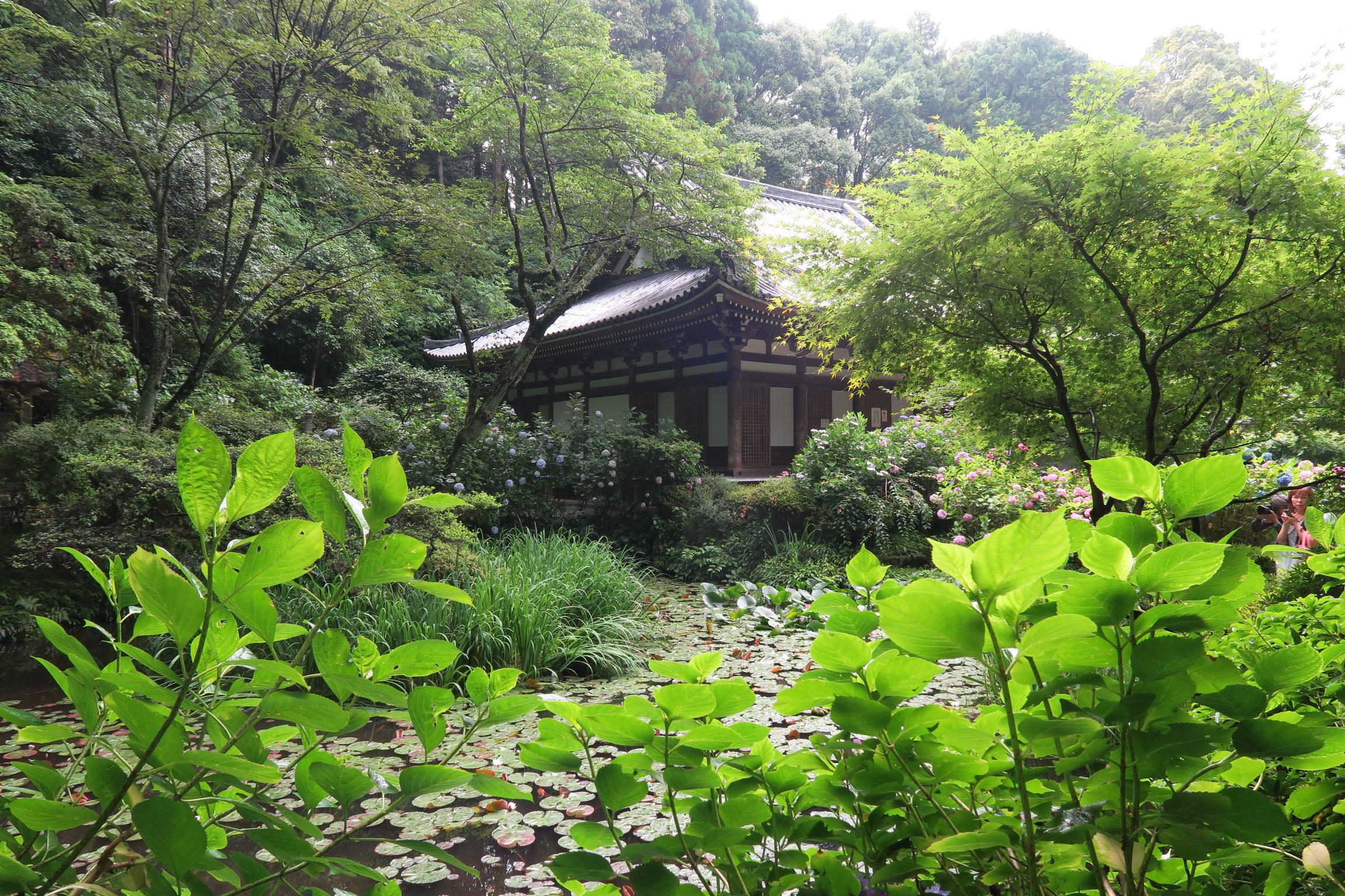 睡蓮も咲く阿字池越しにみた本堂。