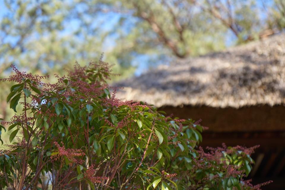 円窓亭。梅の時期が一番華やかです。