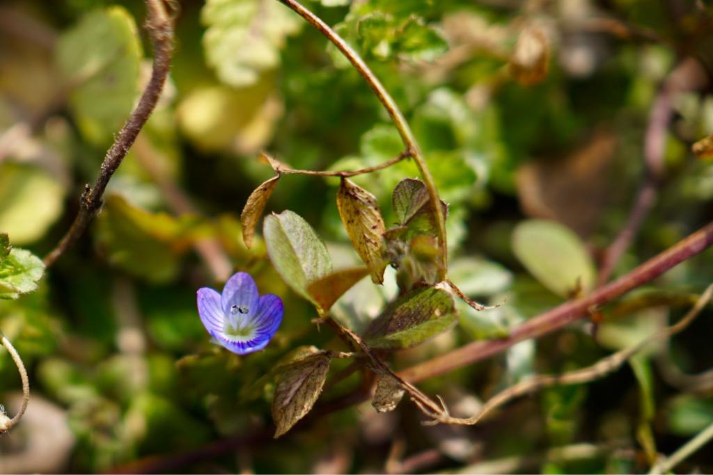 小さい花も咲き始めています。