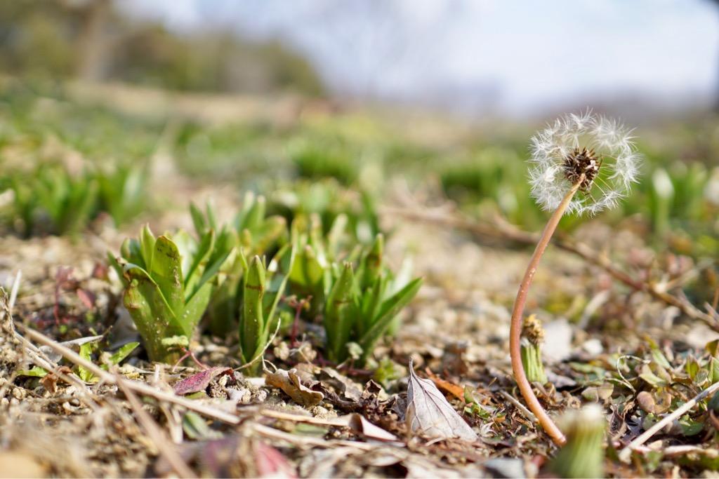 小さい芽がいっぱい出てました。