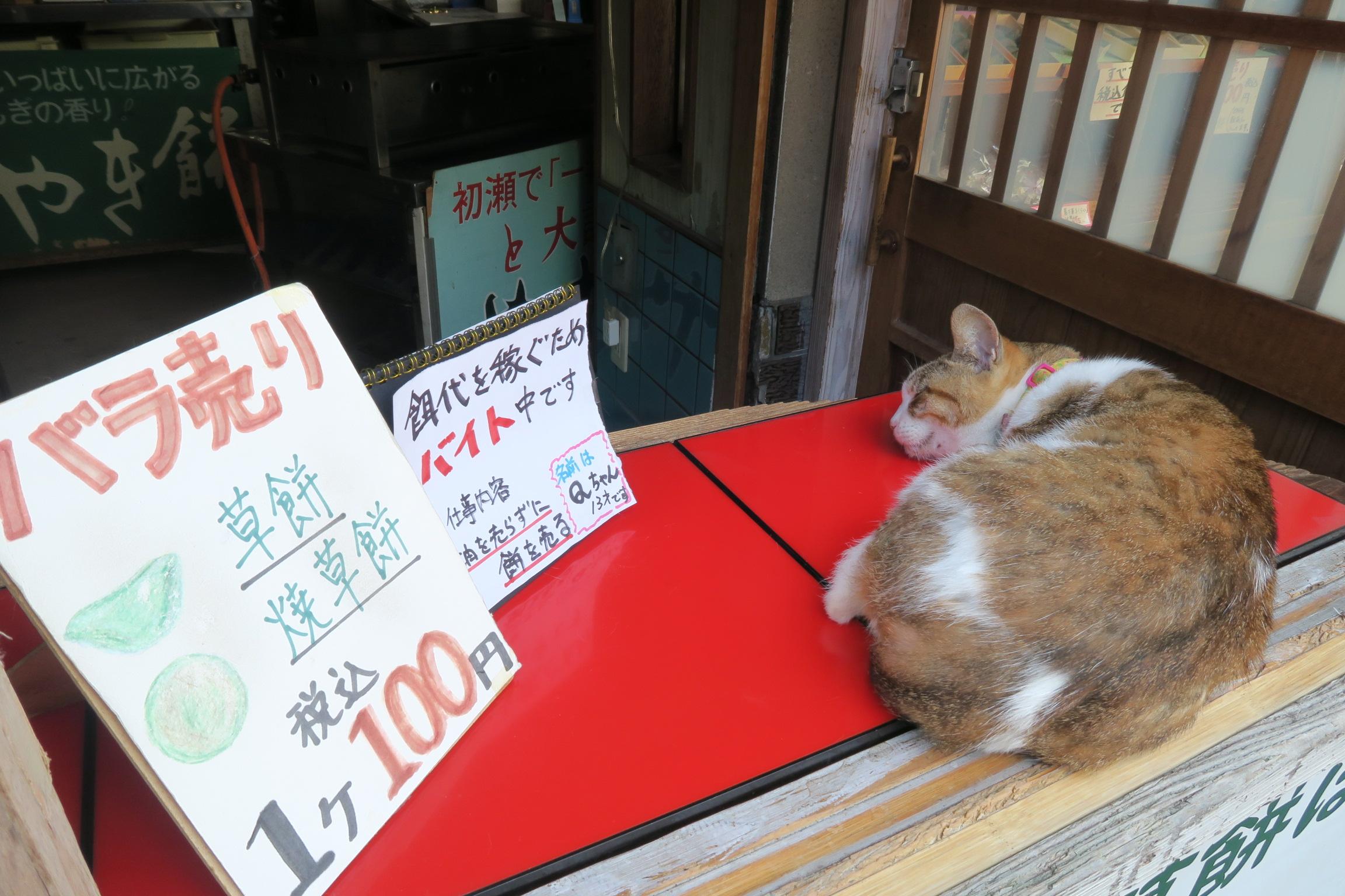 餌代を稼ぐためにバイト中のネコちゃん。ぐっすり寝てます。(笑)