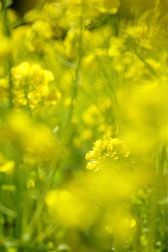 黄色い色はパワーが感じられます。