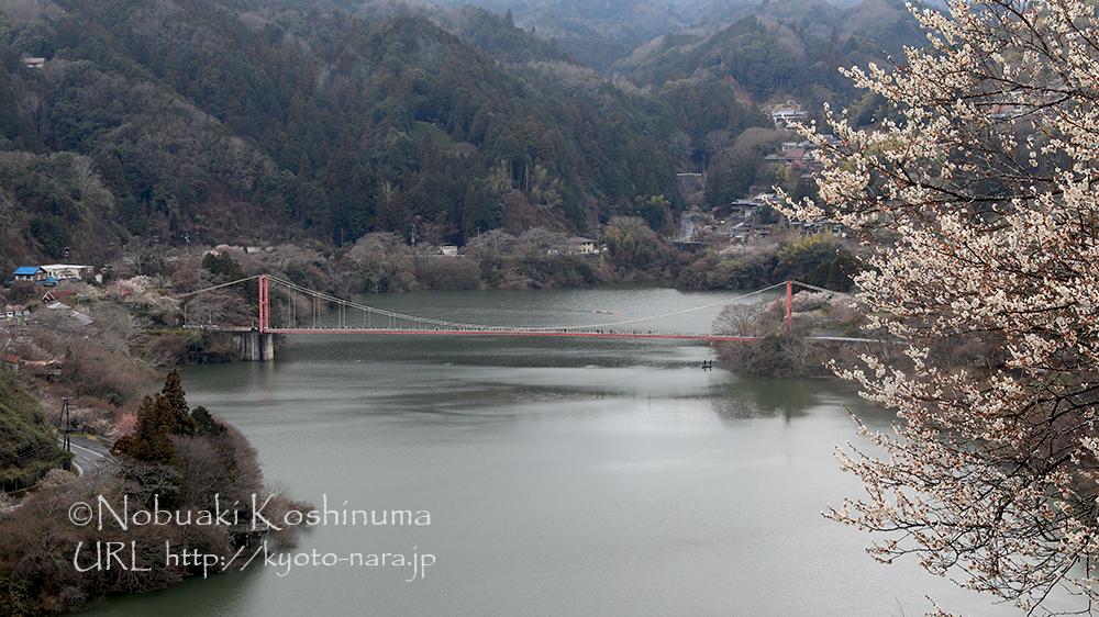 高台から見た八幡橋も見応えがあります。