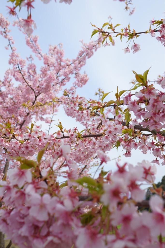 透明感のあるピンクがとても綺麗でした。