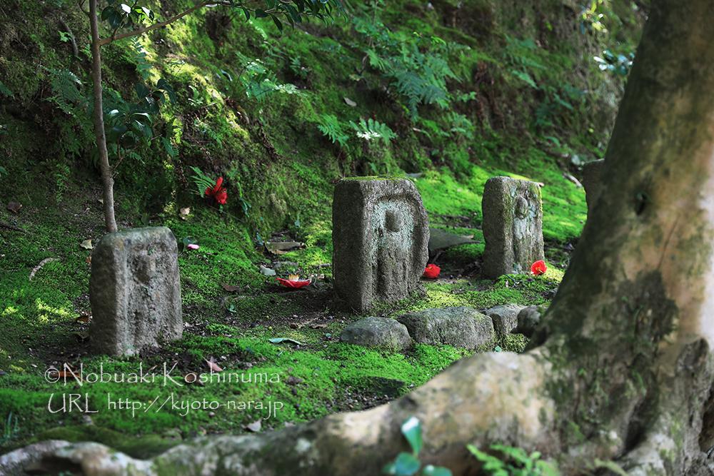 「石佛の路」にある石仏。苔に覆われた中に落ちた椿が素敵でした。