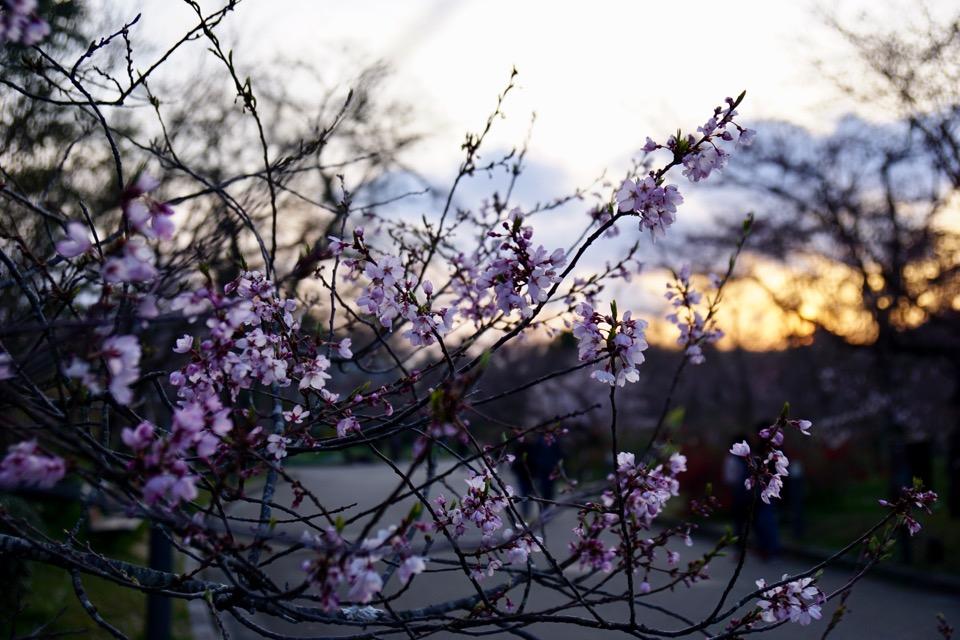 夕方は冷え込んでましたが、夕陽が綺麗で思わず見とれました。