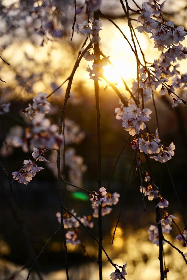 池が黄金に輝いて思わず息を呑む美しさでした。