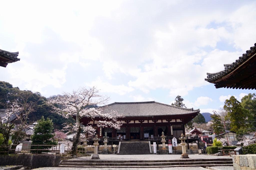 本堂 本堂の周りにも桜がいっぱいです。