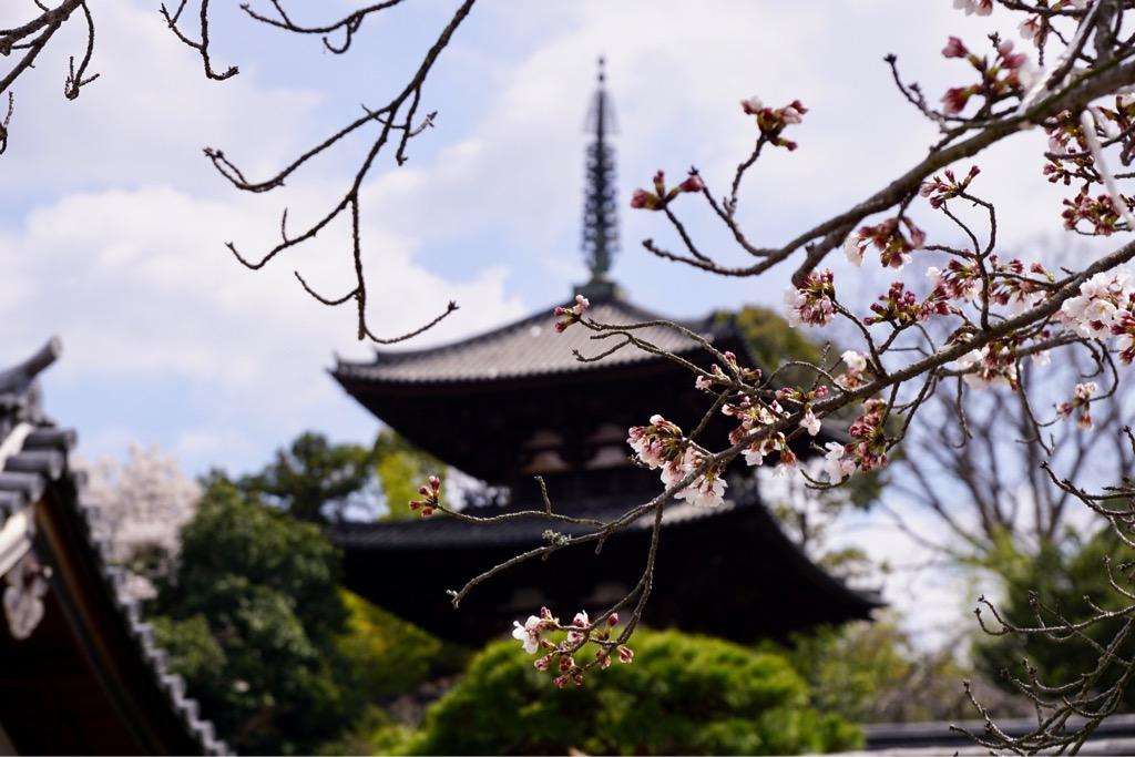 東塔 こちらも桜に囲まれて綺麗でした。