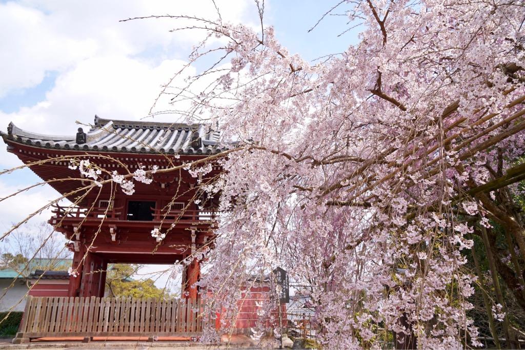 楼門は江戸時代のもので、かつては奥院の正面だったそうです。