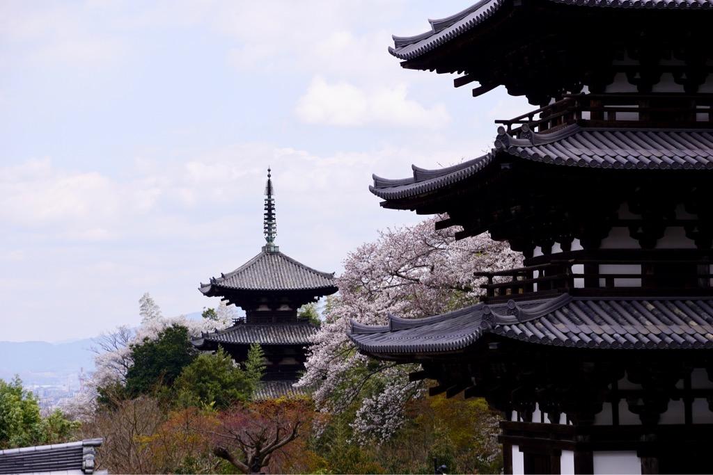 西南院からは東西両塔を眺めることができます。桜に囲まれ素晴らしい景色でした。