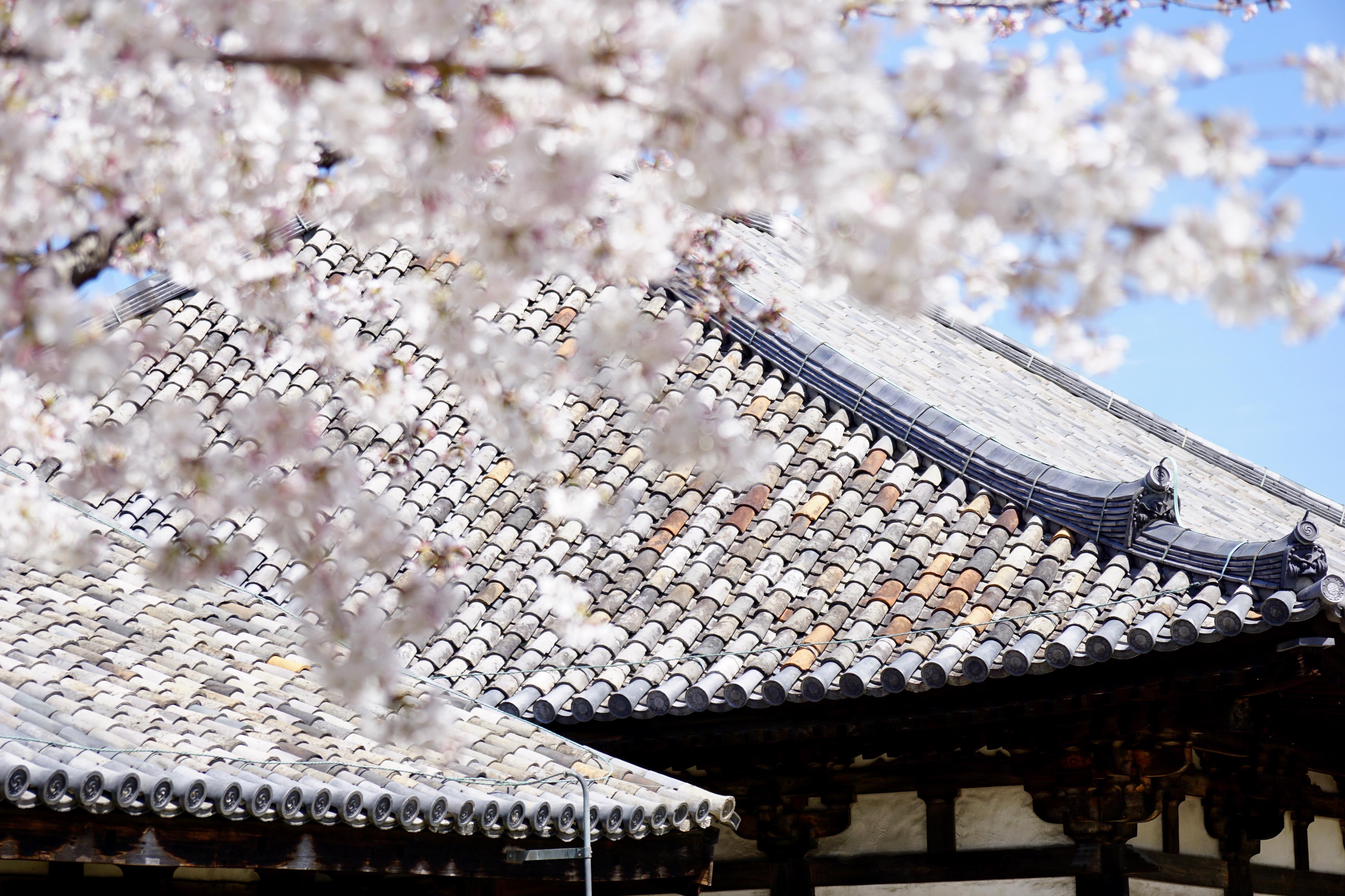 桜が満開で綺麗でした。