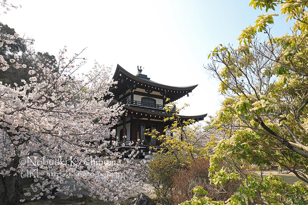門跡寺院の勧修寺。大石神社から車で10~15分ほどです。